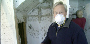 how prevent and remove mold